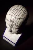 Phrenology Head Stock Image
