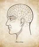Phrenology retro pseudoscience poster or print design over grunge paper background hand drawn vector illustration. Phrenology retro pseudoscience poster or Royalty Free Stock Images