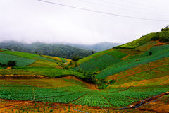 Phu badar berg-khaokhophetchabun Royaltyfri Foto