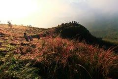 Phu chi fa morning. Stock Image
