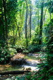 Phu-Kaeng waterfall in deep forest in Thailand. Long exposure Stock Photography