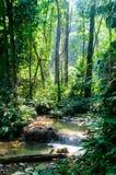 Phu-Kaengwasserfall im tiefen Wald in Thailand stockfotografie