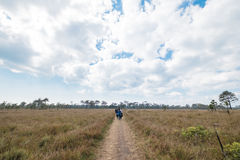 Phu Kradueng国家公园 免版税库存图片