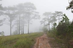 Phu Kradueng National Park Royalty Free Stock Image