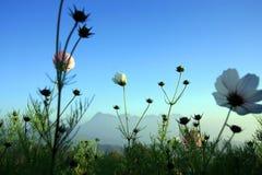 Phu Kradueng nationalpark Royaltyfria Bilder