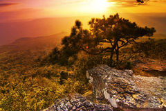 Phu Kradueng nationalpark, Thailand Royaltyfria Bilder
