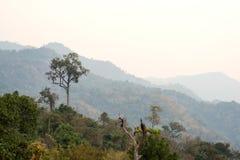 Phu Langa är synvinkeln i nordligt av Thailand Arkivfoton