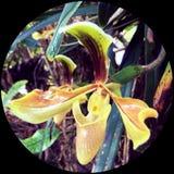 Phu Luang s flower Stock Photos