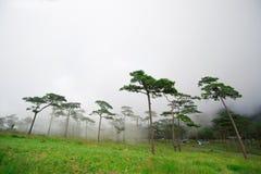 Phu Soi Dao fotografía de archivo