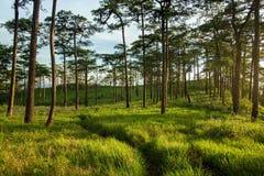 Phu Soi Dao, foresta verde Fotografie Stock Libere da Diritti
