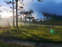 Phu Soi Dao National Park Imagens de Stock
