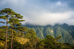 Phu Soi Dao National Park Photo stock
