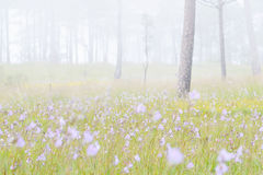 Phu Soi Dao national park. Forest in the mist at Phu Soi Dao national park  Thailand Stock Photography