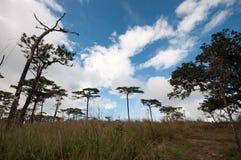Phu-soi dao Nationalpark Uttaradit Lizenzfreie Stockbilder