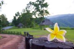 Phu Suan Sai park narodowy Obrazy Royalty Free