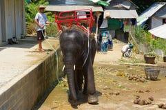 PHUKET, ΤΑΪΛΆΝΔΗ - 28 ΜΑΡΤΊΟΥ 2016: Ένας ελέφαντας μωρών μετά από την πλύση στην καυτή ημέρα Στοκ Εικόνες