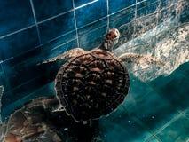 Phuket-Aquarium durch Yaman Mutart stockbild