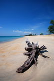 Phuket beach. The natural sculpture on beautiful tropical beach Royalty Free Stock Photography