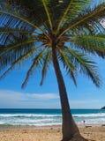 Palm in NaiHarn beach seaview Phuket  Stock Images