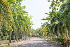 Phuket park Zdjęcia Royalty Free