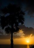 Phuket-Sonnenuntergang mit Palme Stockbild