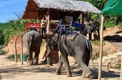 Phuket, Tailandia: Accampamento basso di viaggio dell'elefante Immagini Stock