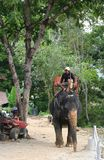 Elephant coming from jungle  to pick up tourists Stock Photo