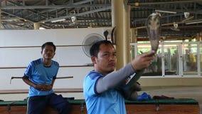 Phuket Thailand - Februari 19, 2017: Ormförlagehanterare med giftiga showtrick för en kobra stock video