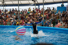 PHUKET THAILAND - JAN 9, 2016 : Performance of clever dolphins w Stock Photo