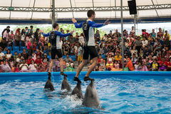 PHUKET THAILAND - JAN 9, 2016 : Performance of clever dolphins w Royalty Free Stock Photos