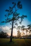 PhuKradueng national park Stock Photos