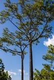 Phukradueng National Park Royalty Free Stock Photo