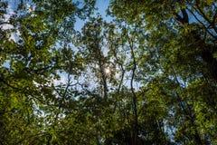 Phukradueng National Park Stock Images
