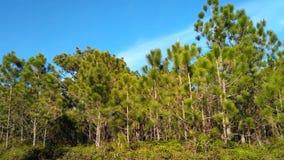 Phukradueng national park. Phukradueng in Thailand royalty free stock images