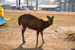 Phukradueng,Phukradueng National Park,Thailand Stock Image