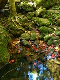 Phukradung waterfall Stock Photography