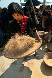 Phutai minority woman pounding and winnowing rice. KALASIN,THAILAND-MARCH 9 : Group of unidentified Phutai minority senior woman competitive pounding and Stock Images