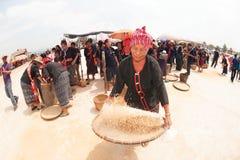 Phutai minority woman pounding and  winnowing rice. KALASIN,THAILAND-MARCH 9 : Group of unidentified Phutai minority senior woman competitive pounding and Stock Image