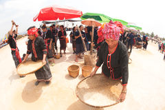 Phutai minority woman pounding and winnowing rice. KALASIN,THAILAND-MARCH 9 : Group of unidentified Phutai minority senior woman competitive pounding and Stock Photography