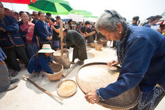 Phutai minority woman winnowing rice. KALASIN,THAILAND-MARCH 9 : Group of unidentified Phutai minority senior woman competitive pounding and winnowing rice fun Stock Photo