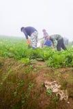 PHUTHAPBOEK PHETCHABUN泰国- 10月9 :在的农夫工作 库存图片