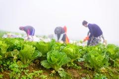 PHUTHAPBOEK PHETCHABUN泰国- 10月9 :在的农夫工作 图库摄影