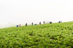 PHUTHAPBOEK PHETCHABUN泰国- 10月9 :在的农夫工作 免版税图库摄影
