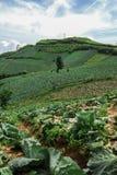 PHUTHAPBOEK PHETCHABUN: Большая ферма капусты на горе и sk Стоковые Изображения