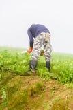 PHUTHAPBOEK PHETCHABUN TAILANDIA - 9 OTTOBRE: lavoro dell'agricoltore in Immagine Stock