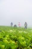 PHUTHAPBOEK PHETCHABUN TAILANDIA - 9 OTTOBRE: lavoro dell'agricoltore nel campo del cavolo Fotografia Stock Libera da Diritti