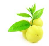 Phyllanthus acidus or Orboroi fruits Royalty Free Stock Image