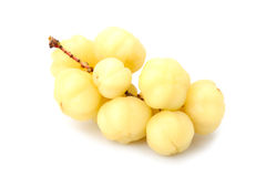 Phyllanthus acidus or star gooseberry Royalty Free Stock Images