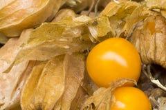 Physalis également connu sous le nom d'alkékenges, coquerets comestibles de coqueret comestible et, amour dans la cage ou lantern Photos libres de droits