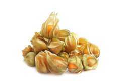Free Physalis Royalty Free Stock Image - 11736756